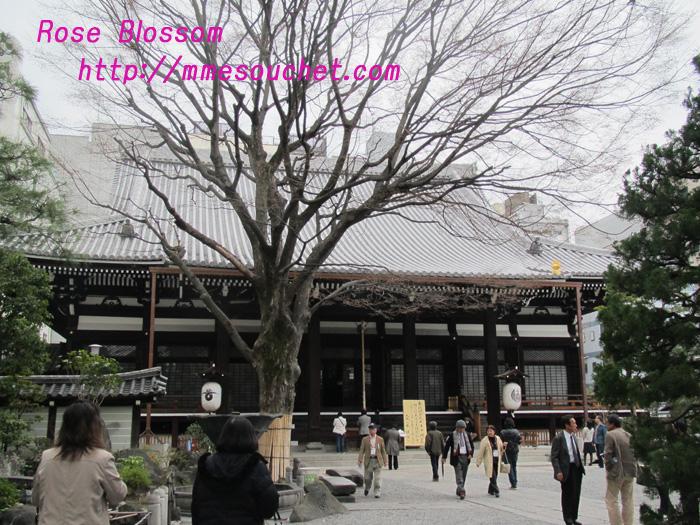 honnnouji20110320.jpg