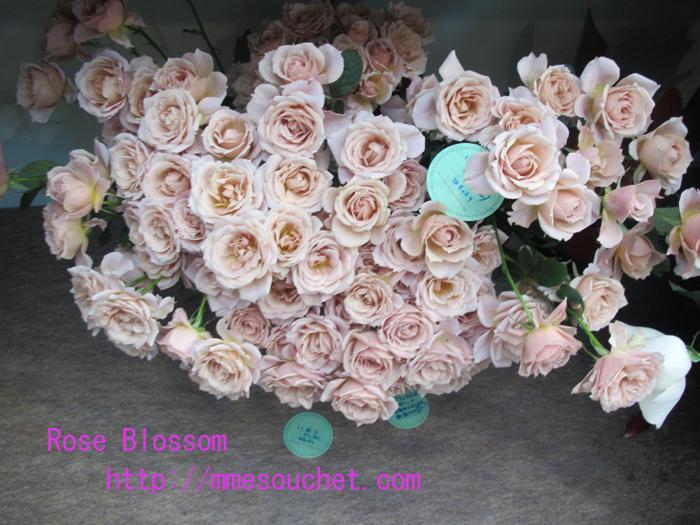 iori20110512.jpg