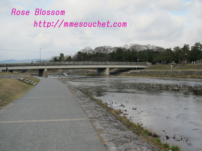 kamogawa20101224.jpg