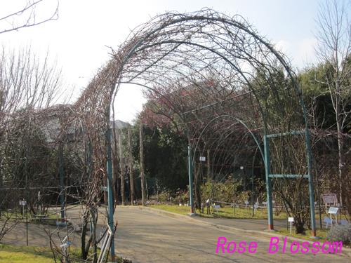 keisei20100219.jpg