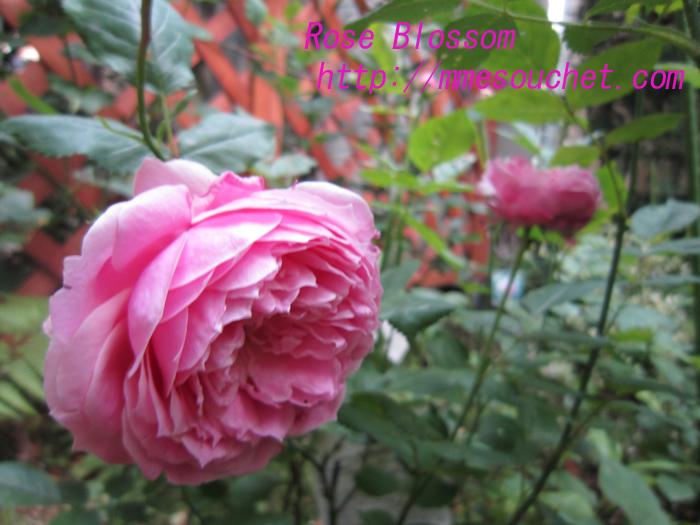 miyako20100526.jpg