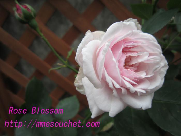 mmesouchet20100518.jpg