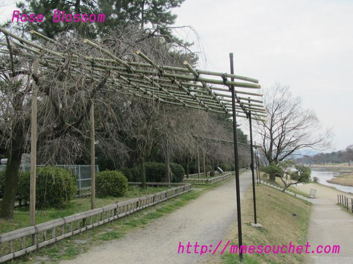 nakaragi20110320.jpg