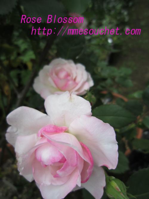 orusora20100518.jpg
