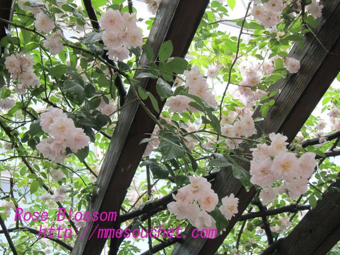paulsup20100524.jpg