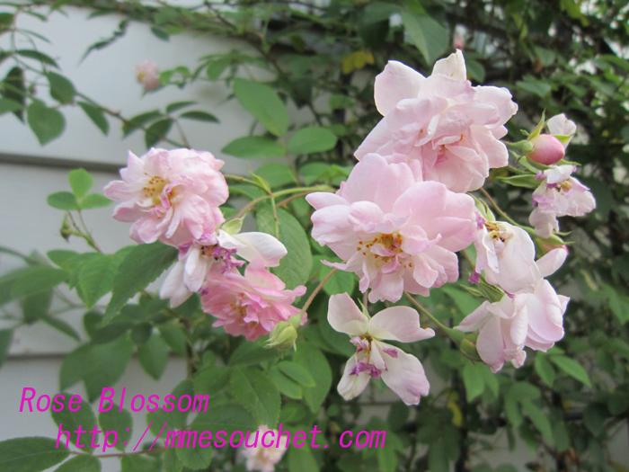 paulzhimarayan20100526.jpg