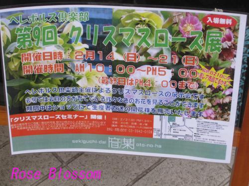 poster20100217.jpg