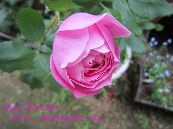 rarenu201005071.jpg