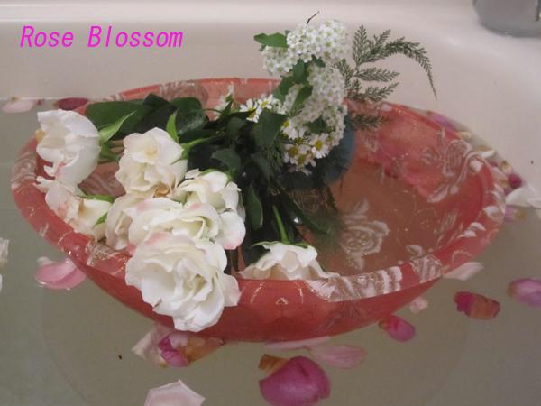 rose201002271.jpg