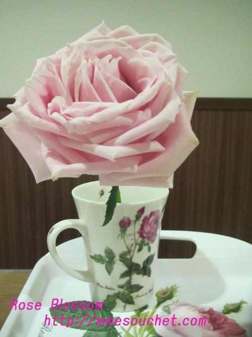 rose20110212.jpg