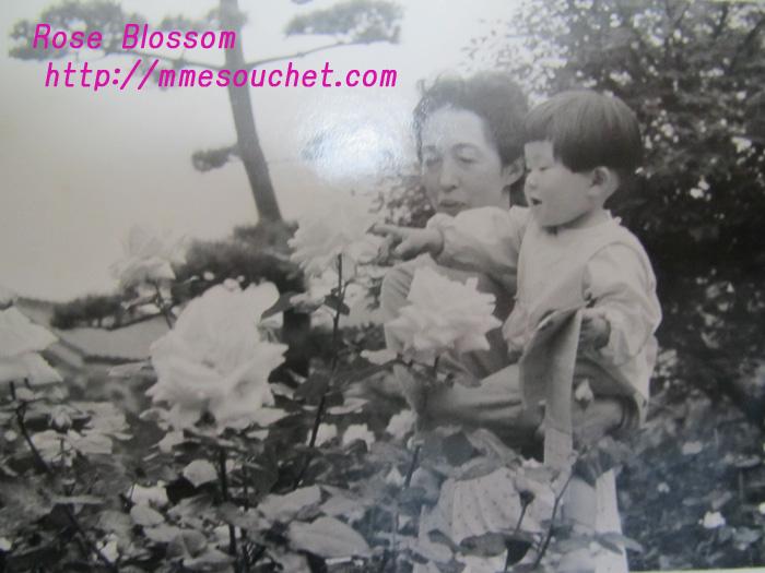 rose20110301.jpg