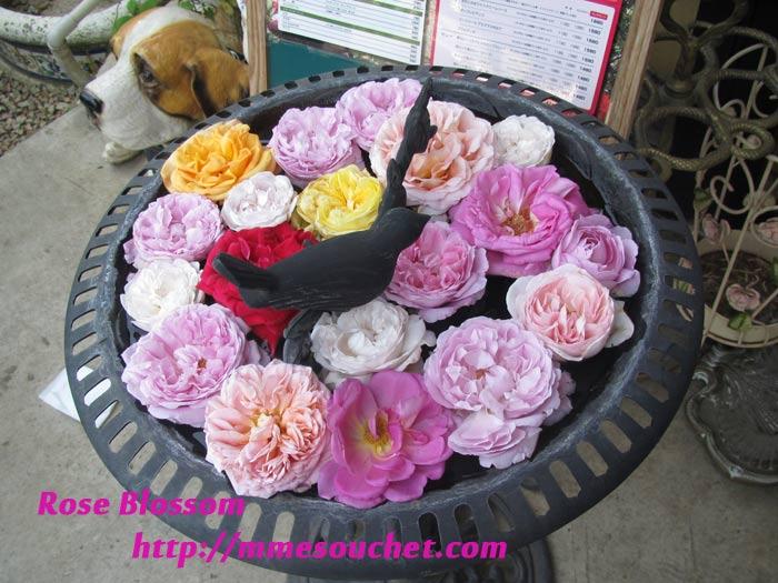 rosebass20110514.jpg