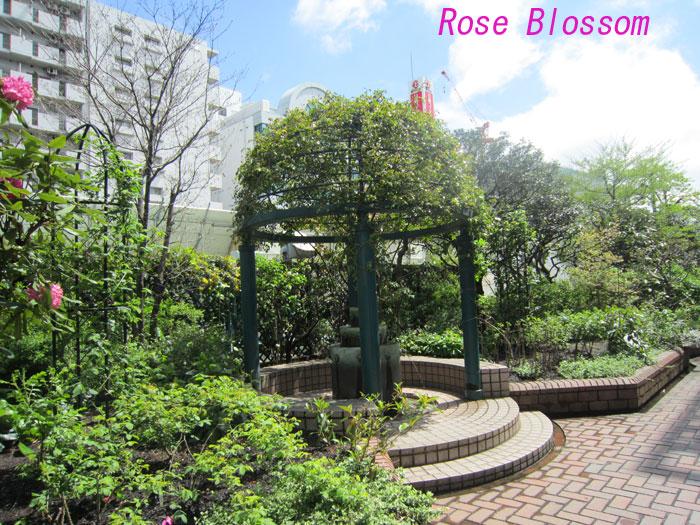 rosegarden20100417.jpg