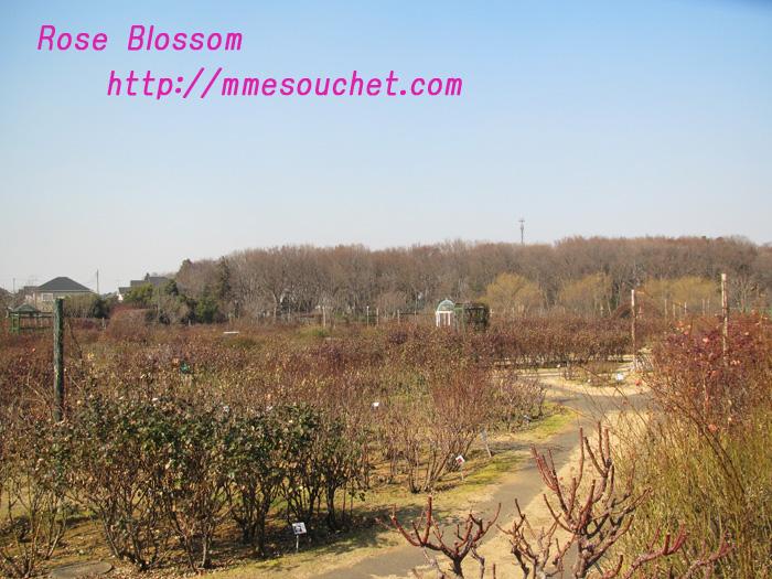 rosegarden20110204.jpg