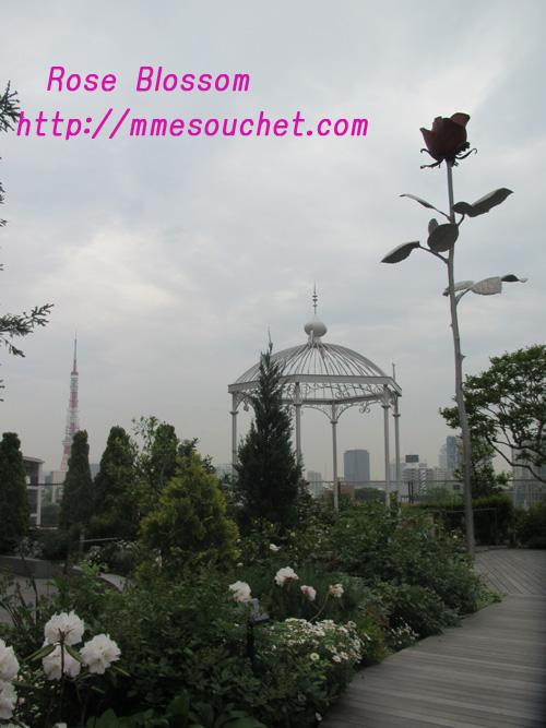 rosespot20110510.jpg