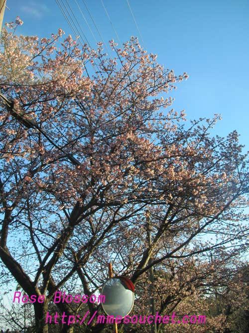 sakura20110130.jpg