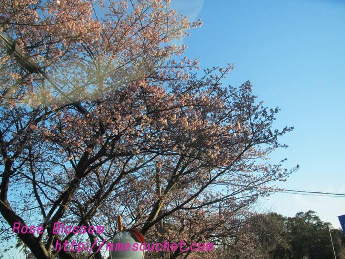 sakura201101301.jpg