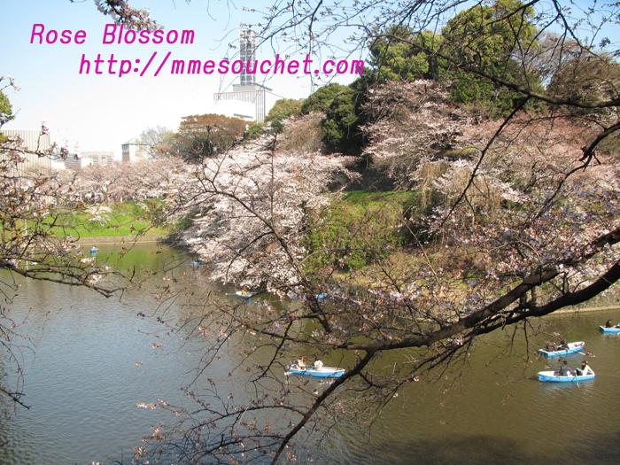 sakura201104071.jpg