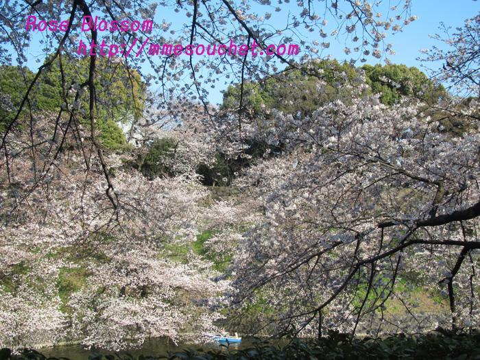 sakura201104074.jpg