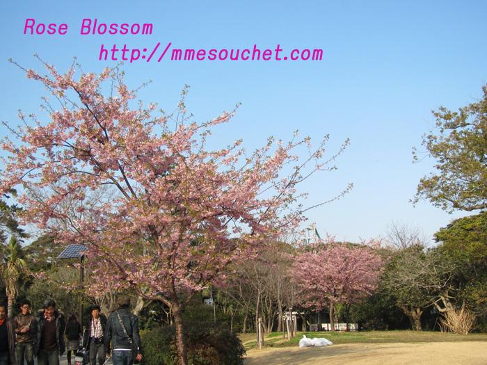 sakurapark20110227.jpg