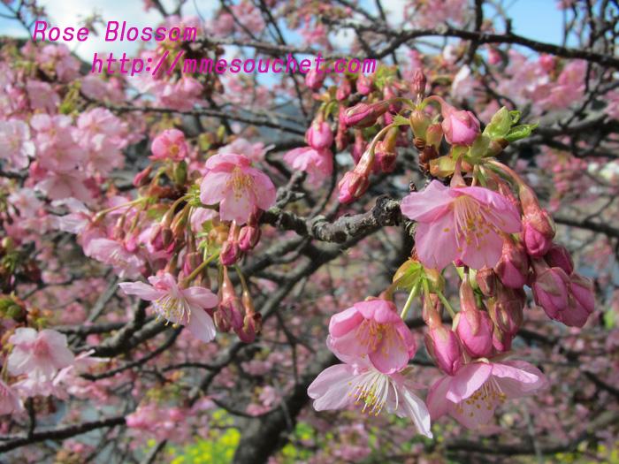 sakuraup20110226.jpg