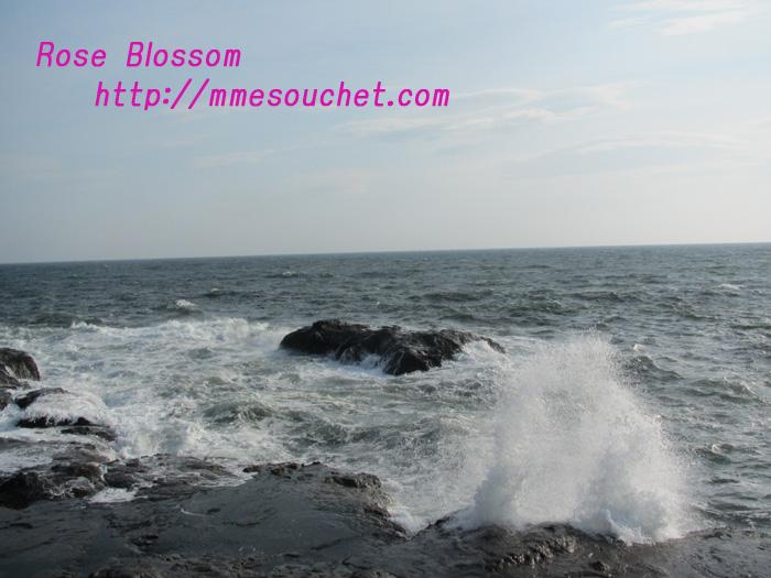 sea201102271.jpg