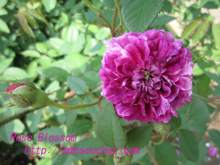 sigyoku20100525.jpg