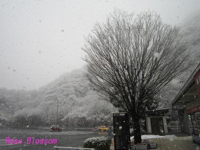 snow20100329.jpg