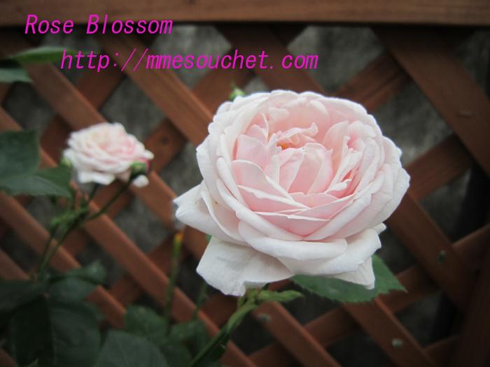 souchet20100519.jpg