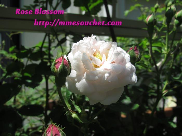 souchet20110515.jpg