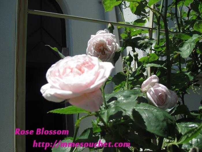 souchet201105151.jpg