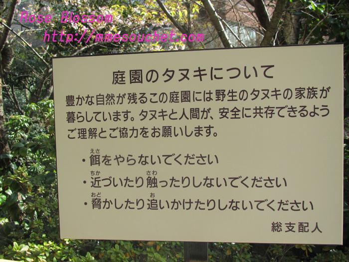 tanukiboard20110218.jpg