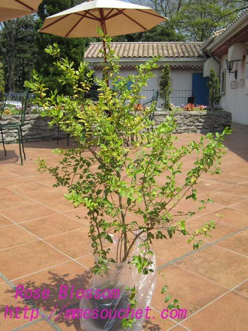 tree20100505.jpg
