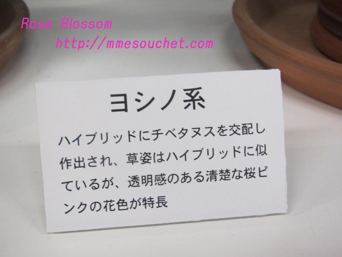 yoshino201102181.jpg