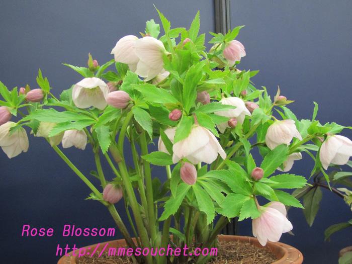yoshino201102182.jpg