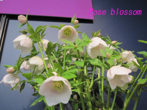 yosino20100220.jpg