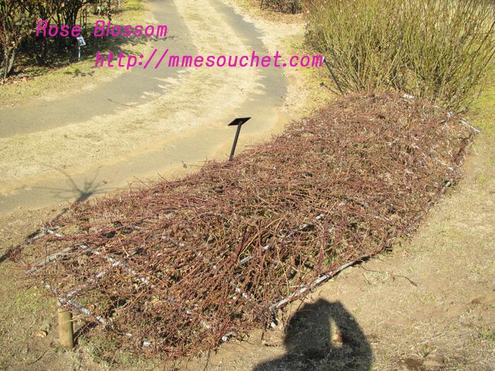 yuin201102042.jpg