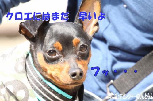 IMG_4327[1]10