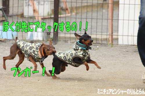 IMG_4352[1]15