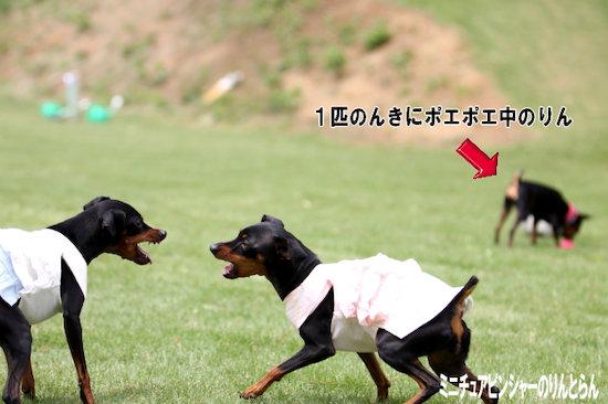 IMG_9034[1]07