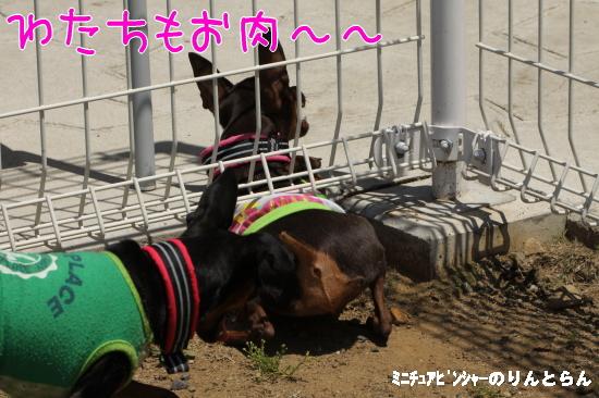 IMG_1421.jpg