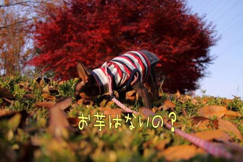 IMG_406611.jpg
