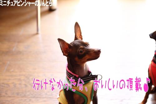 IMG_668502.jpg