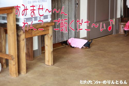 IMG_8554_R.jpg