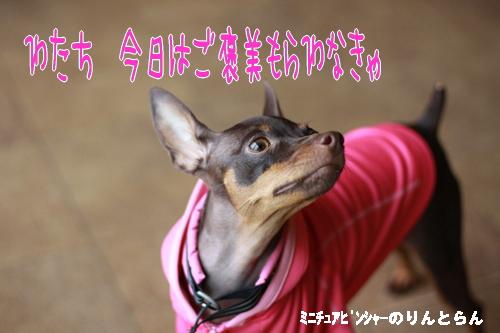 IMG_8557_R.jpg