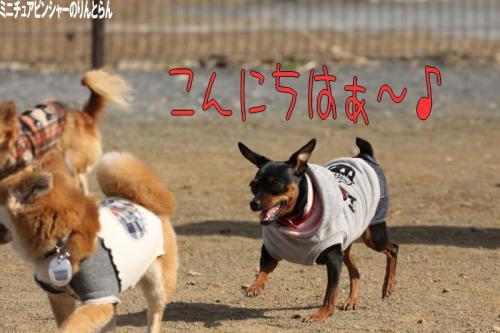 IMG_986812.jpg