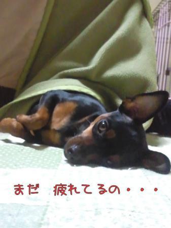 Photo0018.jpg