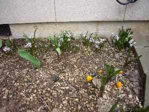 2010年春花壇