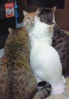 猫9 (3)