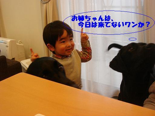11 12 24豆太郎くん